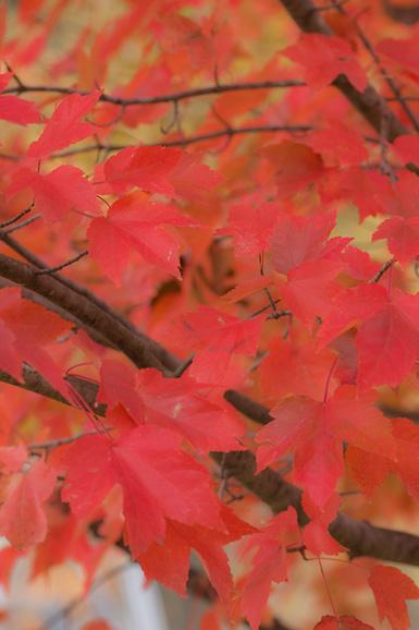 November-01,-2008_1881.jpg